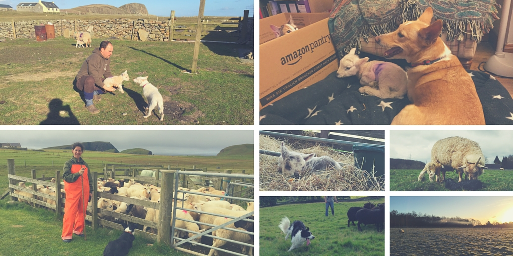 Lambing16 Key Stories From The Season Part 3 Image 1